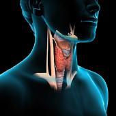 Консультация АИТ и гипотериоз